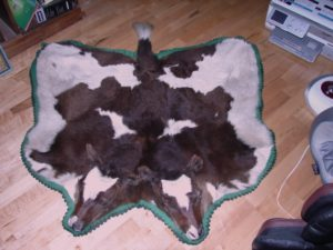 Very Old 2 headed Calf Rug, From Wisconsin....$2500