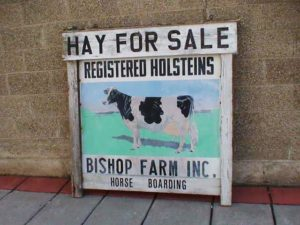 Large two sided Farm Sign for Holstein Cows..They Have Hay For Sale at Bishop Farms