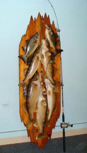 fishmount